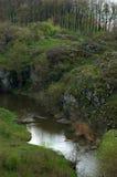 Arroyo en bosque Foto de archivo libre de regalías