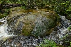 Arroyo en bosque Imagen de archivo libre de regalías