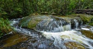 Arroyo en bosque Fotografía de archivo libre de regalías