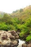 Arroyo en bosque imperecedero seco Fotografía de archivo libre de regalías