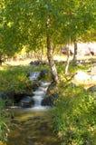Arroyo en el bosque Imagen de archivo libre de regalías
