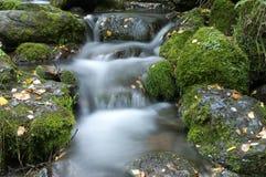 Arroyo en el bosque Foto de archivo libre de regalías