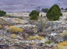 Arroyo par des dunes Image libre de droits
