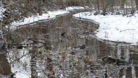 Arroyo que atraviesa un paisaje nevoso almacen de metraje de vídeo