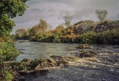 Arroyo que burbujea rodeado por los árboles y los arbustos verdes Fotografía de archivo libre de regalías