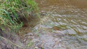Arroyo/río claros del agua de la charla en verano almacen de video