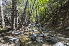 Arroyo Seco Creek in the San Gabriel Mountains. Arroyo Seco creek above Switzer Falls in the San Gabriel Mountains near Los Angeles, California Stock Images