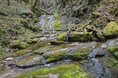 Arroyo sobre boj del verdor del musgo de las rocas en la selva imágenes de archivo libres de regalías