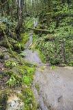 Arroyo sobre boj del verdor del musgo de las rocas en la selva imagen de archivo
