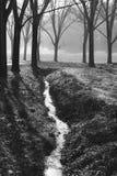 Arroyuelo entre los árboles en el parque fotografía de archivo