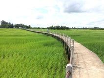 arroz Foto de Stock