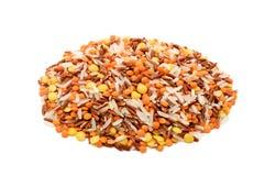 Arroz Basmati e lentilhas Imagem de Stock Royalty Free