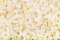 Arroz blanco crudo de grano corto de Italica Imagen de archivo libre de regalías