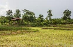 Arroz campo y cabaña de madera en rural de Tailandia Fotografía de archivo libre de regalías