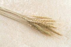 Arroz con los oídos del arroz en el fondo fotografía de archivo libre de regalías
