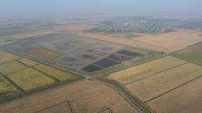 Arroz creciente en campos inundados Arroz maduro en el campo, el principio de la cosecha una opinión del s-ojo del ` del pájaro almacen de video