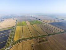 Arroz crescente em campos inundados Arroz maduro no campo, o começo da colheita Uma vista aérea Foto de Stock Royalty Free