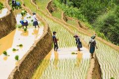 Arroz crescente em MU Cang Chai, Yen Bai, Vietname Fotografia de Stock Royalty Free