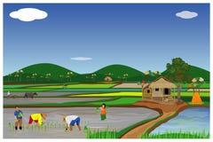 Arroz da transplantação do fazendeiro que semeia no campo de almofada ilustração royalty free