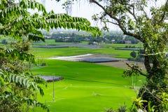 Arroz da transplantação dos fazendeiros em um campo vietnam Fotos de Stock Royalty Free