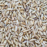 arroz de arroz marrón Fotografía de archivo libre de regalías