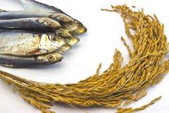 Arroz de arroz y pescados secados en el fondo blanco Imagen de archivo