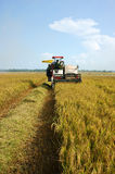Arroz de la cosecha del granjero con la máquina segadora Foto de archivo libre de regalías