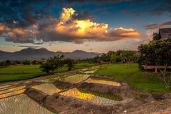 arroz de la granja Fotografía de archivo