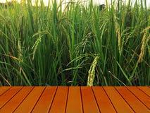 Arroz de oro en campo verde del arroz detrás de la terraza de madera marrón imagenes de archivo