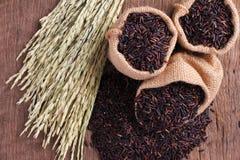 Arroz de Riceberry Imagem de Stock Royalty Free