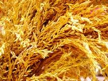 Arroz de arroz suave del foco imagen de archivo