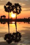 Arroz del campo en la puesta del sol Imagenes de archivo