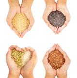 Arroz del negro, del arroz, marrón y de oro sostenido en aislante de cuatro manos en el fondo blanco Imagen de archivo