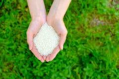 Arroz en manos abiertas de la mujer en fondo de la hierba verde Foto de archivo