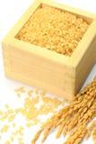 Arroz integral e orelha Sprouted do arroz Imagem de Stock