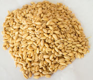 Arroz integral ou GABA-arroz germinado, propriedades medicinais Imagem de Stock