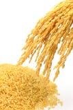 Arroz moreno y oído brotados del arroz Fotografía de archivo libre de regalías