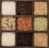 Arroz nueve variedades en un rectángulo de las impresoras Fotografía de archivo libre de regalías
