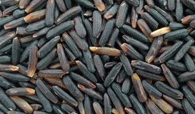 Arroz púrpura negro orgánico imagen de archivo libre de regalías