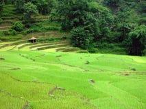 Arroz Paddy Farm con una vertiente en Nepal Foto de archivo libre de regalías