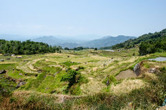 Arroz Paddy Fields de Sulawesi Fotos de archivo libres de regalías