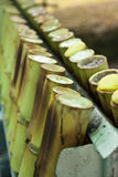Arroz pegajoso asado en las juntas de bambú Imagen de archivo libre de regalías