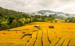 Arroz que cultiva en Tailandia Fotos de archivo libres de regalías