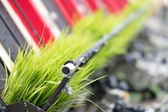 arroz que planta la máquina Almácigo del arroz del trasplante en el campo de arroz b imágenes de archivo libres de regalías