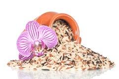 Arroz salvaje con la orquídea decorativa Imagen de archivo libre de regalías
