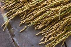 Arroz tailandés de Jusmine/Hawm Mali Rice /Jusmine/arroz de Riceberry imagenes de archivo