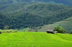 Arroz verde Foto de Stock
