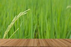 arroz verde en campo de arroz plantación, granja, agricultura con el wo imágenes de archivo libres de regalías