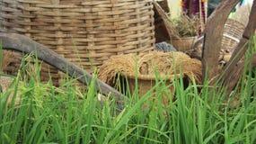 Arroz verde y seco Granero local imagen de archivo libre de regalías