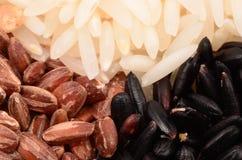 Arroz vermelho e branco preto Imagem de Stock
